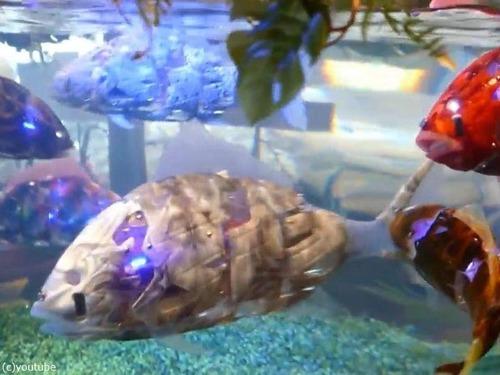日本の魚ロボット01