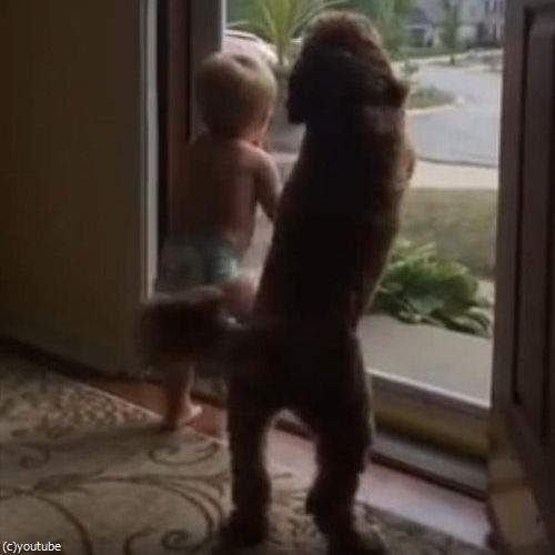 赤ちゃん&犬「パパが帰ってきた!」05