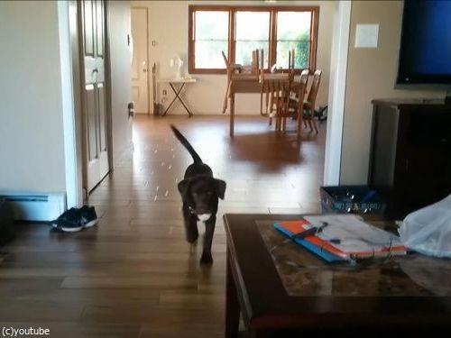 マイペースな犬のボール遊び06