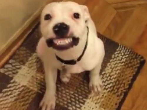犬に「ハイチーズ」04