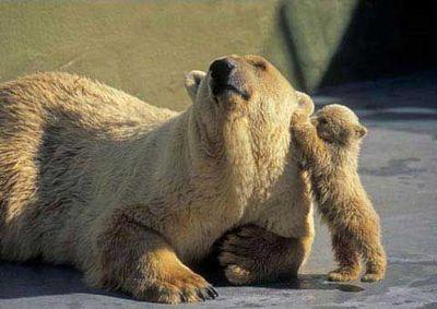 親子愛であふれる動物たち21