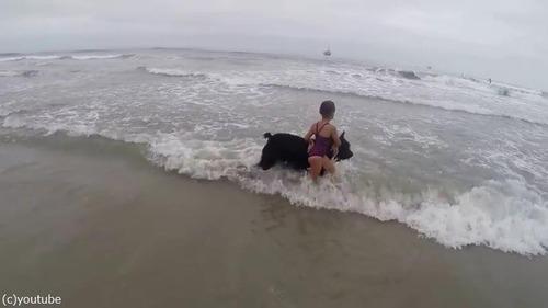 女の子を波から守る犬03