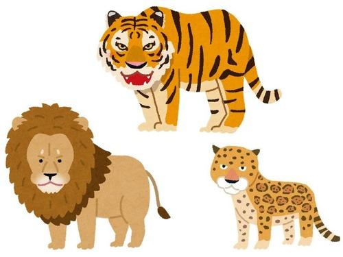 ライオン、虎、ジャガー00