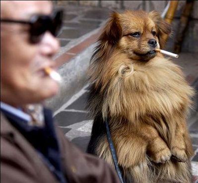 直立した犬猫07