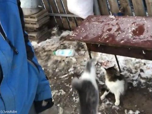 飼い主さんの肩に跳び乗ろうとした猫04