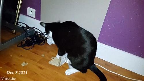 ダンボールをぼこぼこに粉砕する猫09