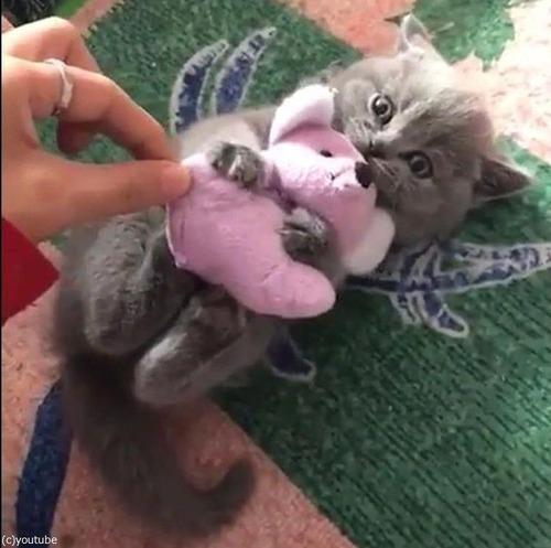 ぬいぐるみを離さない子猫04
