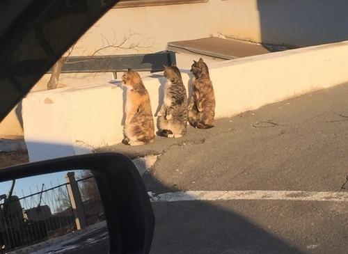 道ばたに猫が3匹01