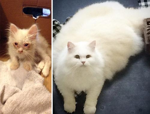 保護した子猫が、すばらしい毛並だった13