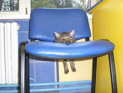 犬や猫の家具の使い方01