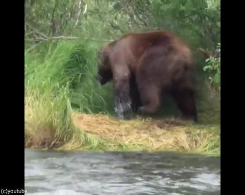 クマの食事04