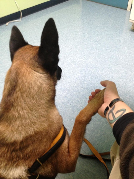 犬や猫が獣医に連れて行かれることを察知したとき04