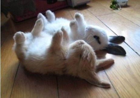 18スヤスヤぐっすり寝る動物たち