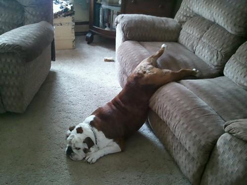 疲れ果てた犬と猫15
