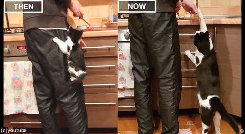 猫の3か月と3歳を比較01