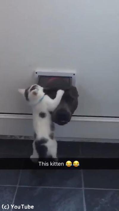 猫ドアで遊ぶワンニャン02