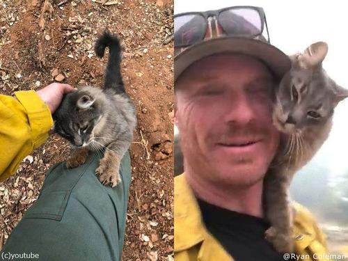 山火事から救出された猫00