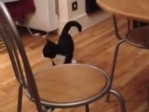 おかしな猫の動き01