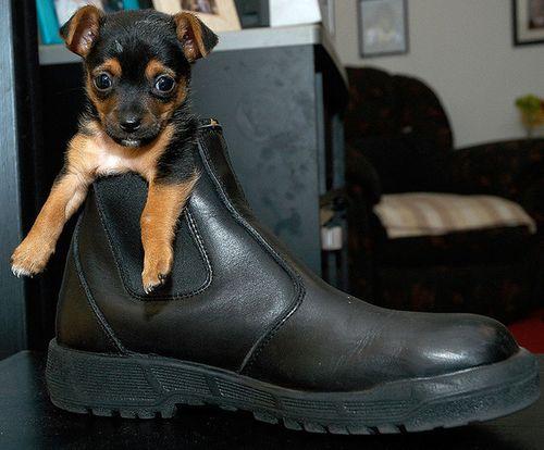 靴の中の犬17