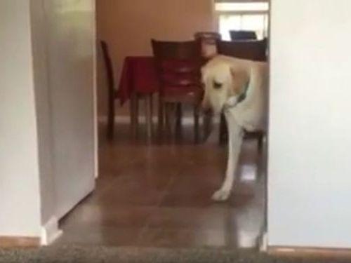 カーペット恐怖症の犬03