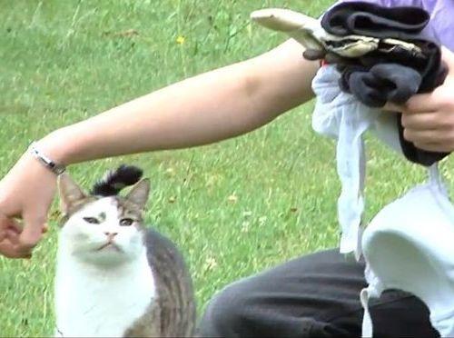 泥棒猫00