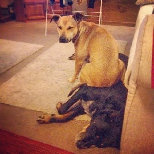 「おすわり」する場所を間違えた犬16