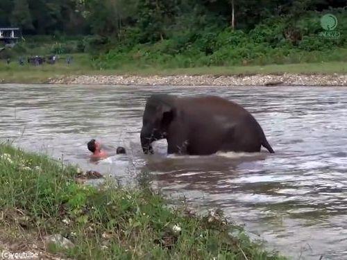 川に流された人間を助ける子ゾウ03
