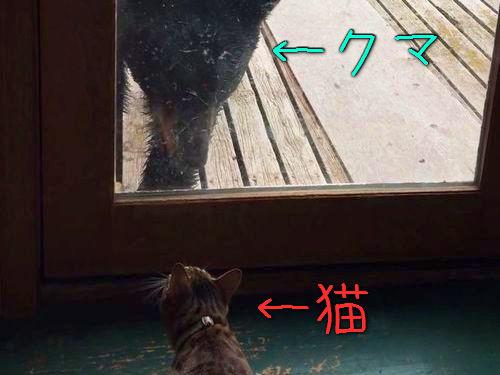 クマを追い払う猫00