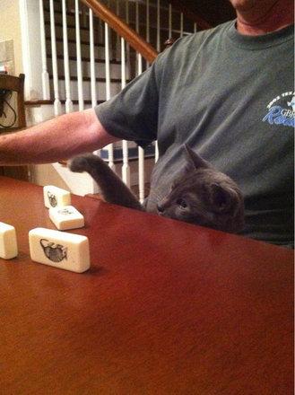 猫をぎゅーっとしたくなる写真21