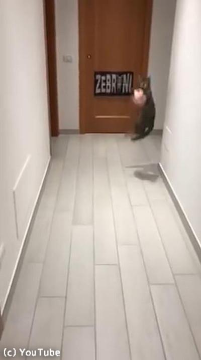 ゴールキーパー猫02