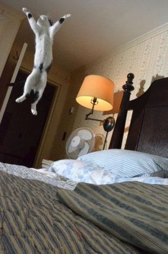 16跳ぶ・飛ぶ動物たち