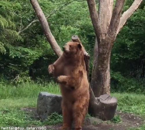 ダンスするクマがかわいい02