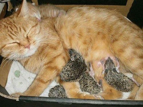 猫とハリネズミの赤ちゃん00