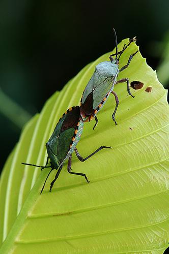 虫の交尾15