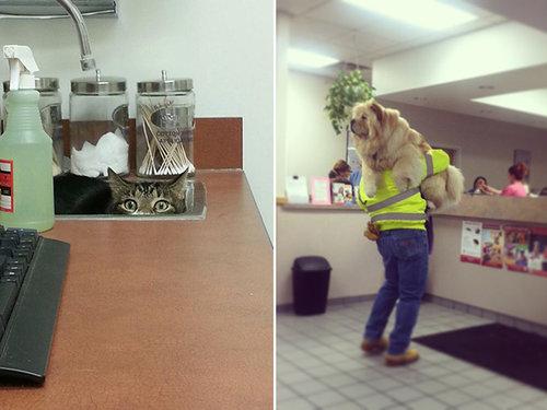 犬や猫を獣医に連れて行くと09