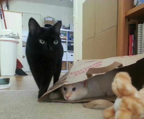 猫が「スパイvsスパイ」01
