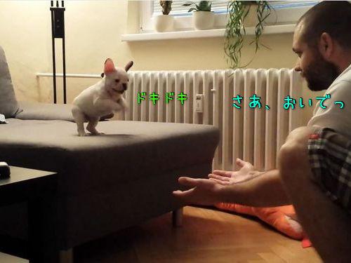 勇気ある子犬のジャンプ00