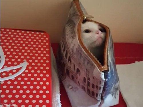 子猫の超高速「いないいないばあ」07
