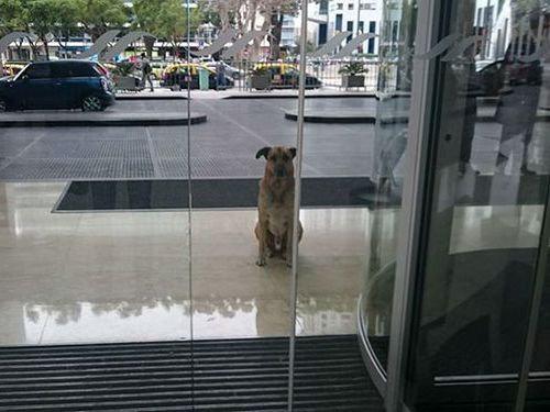 6か月もホテルの前で待ち続けた犬03