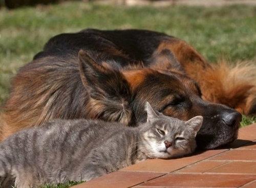 犬と猫がギュッ05
