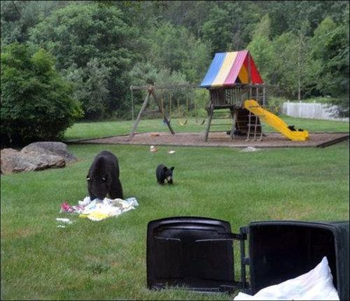 裏庭で遊ぶクマ05