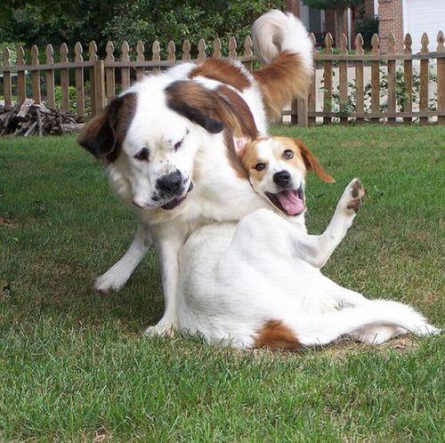 笑う犬13