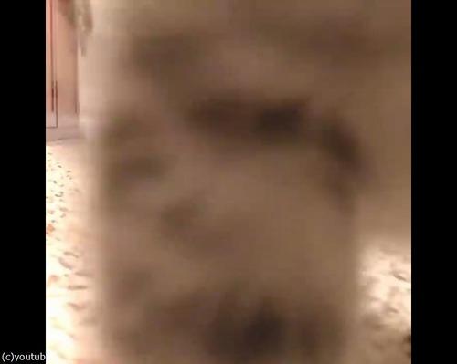 カメラにおそるおそる近づく子猫05