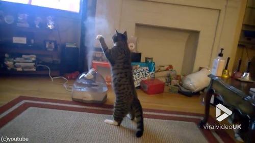 加湿器VS猫02