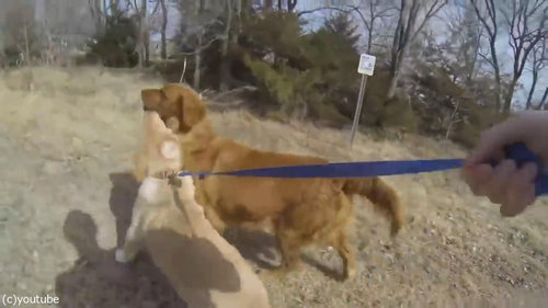 子犬がママと再会06