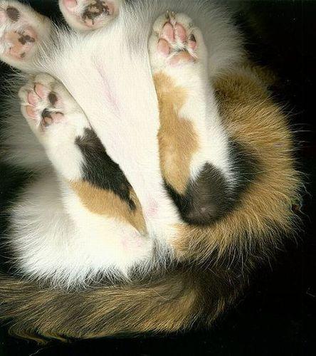 猫スキャン03