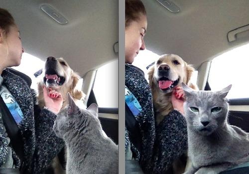 犬と猫の仲がよろしくないとき01