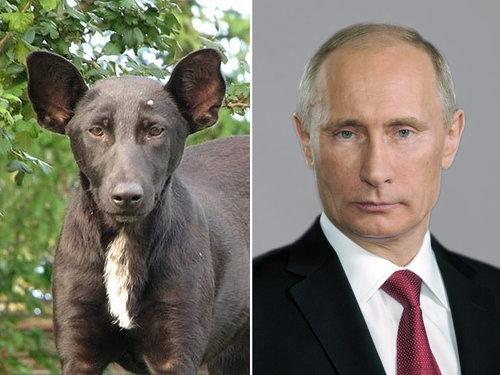 何かに似てる犬たち01