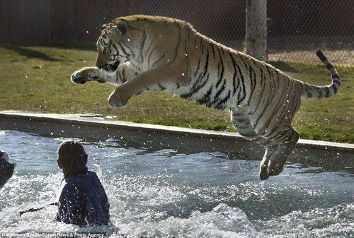 プールに動物15