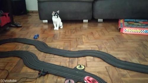 クルマのおもちゃにハイテンションになる猫01